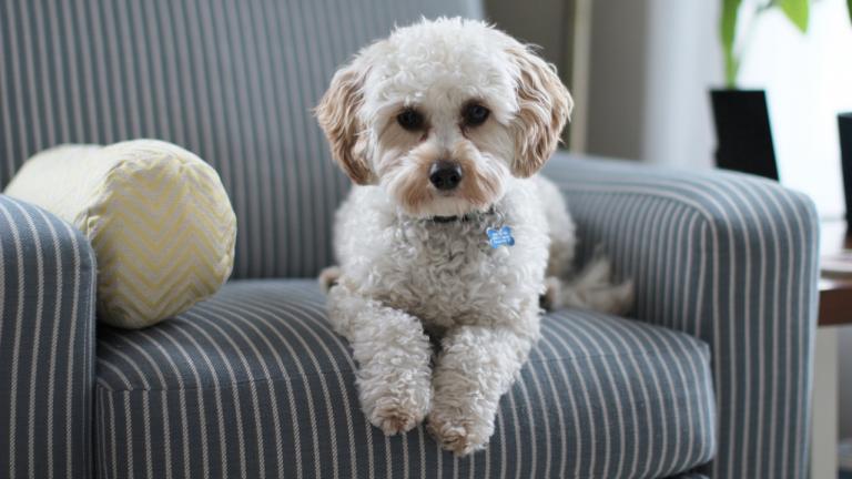 Piesiolandia, czyli wszystko co dzieci powinny wiedzieć o psach